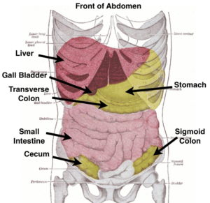 Caring For Your Ribcage And Abdomen Sharing The Health